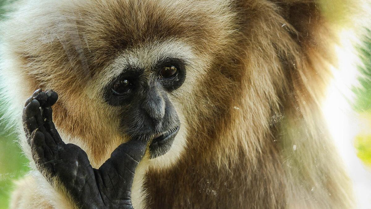 A Bornéo et les vétérinaires d'Univet participent à l'acquisition et la protection de parcelles de forêt tropicale en faveur de l'association Kalaweit