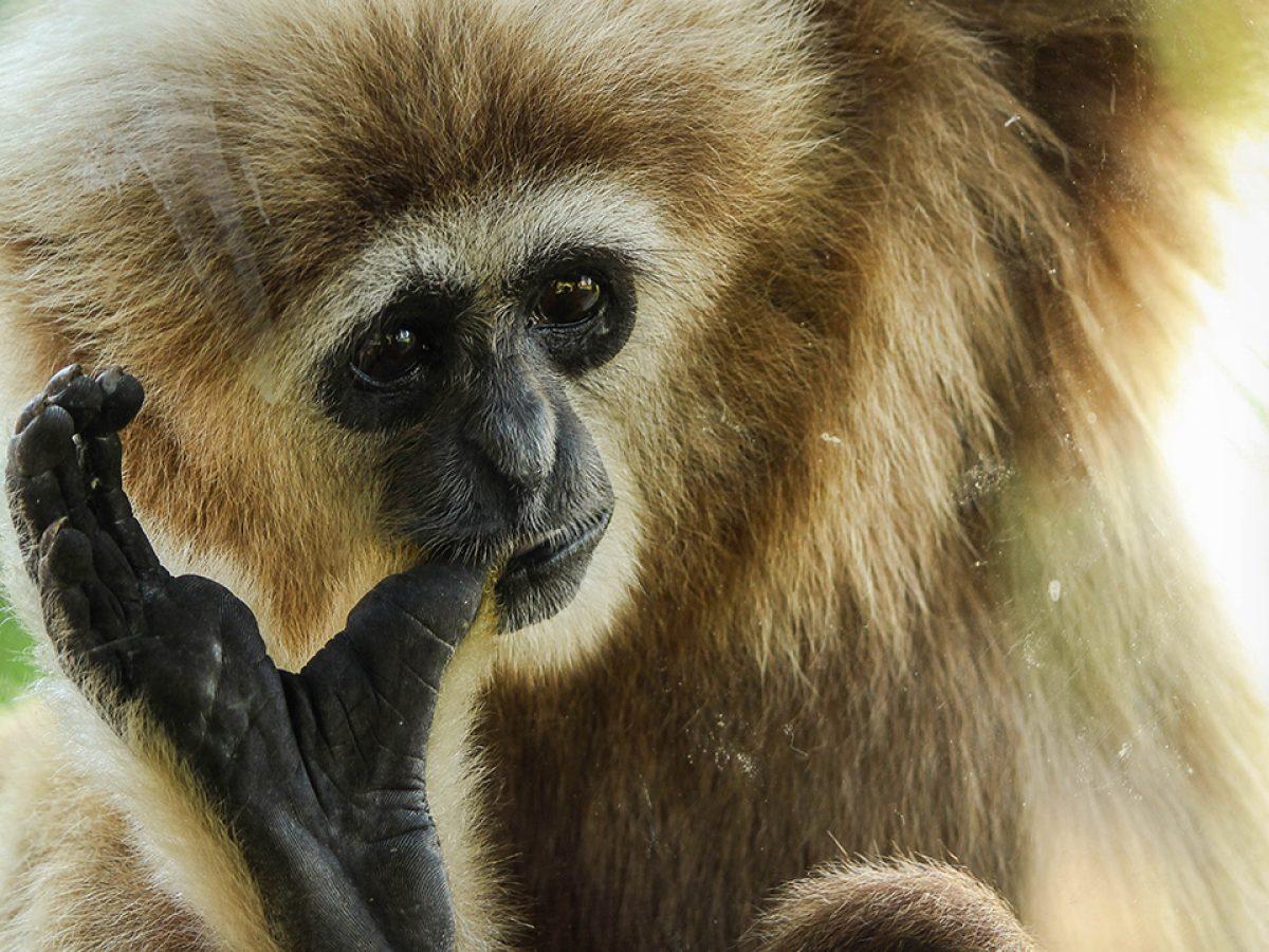 A Bornéo, Feralis et les vétérinaires d'Univet participent à l'acquisition et la protection de parcelles de forêt tropicale en faveur de l'association Kalaweit