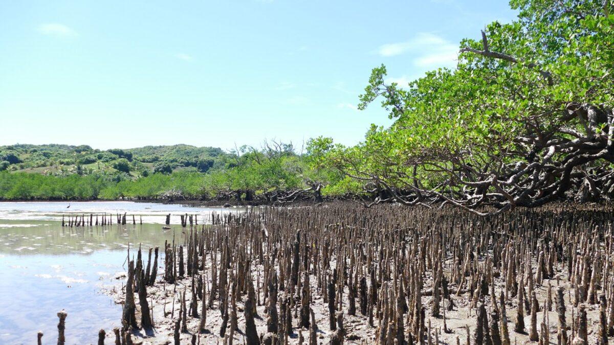 Les sites Ramsar de Madagascar protègent 1,5 million d'hectares de zones humides !