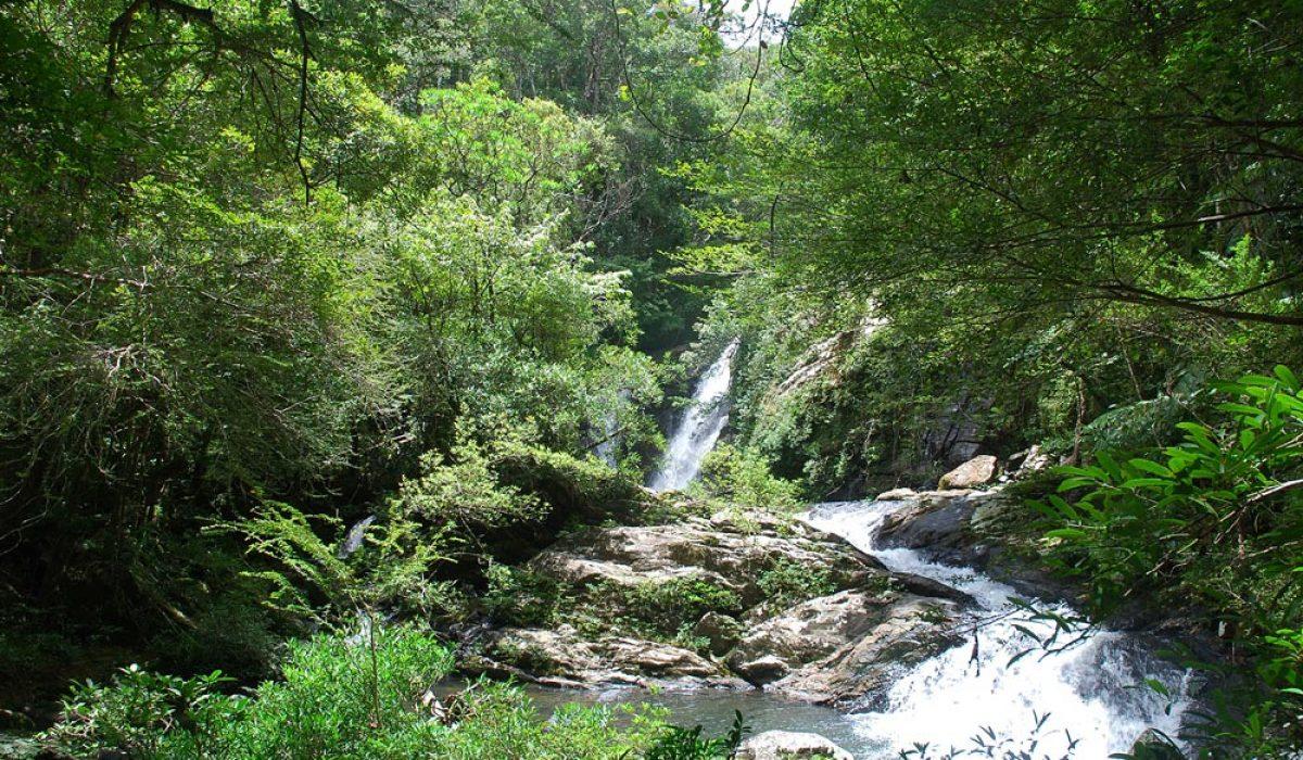 La forêt d'Ambodiriana à Manompana (commune de Madagascar )