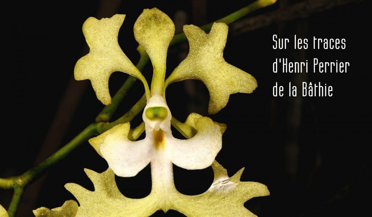 À la recherche des Orchidées de Madagascar