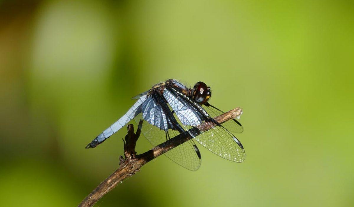 Situation critique pour la biodiversité des zones humides de Madagascar