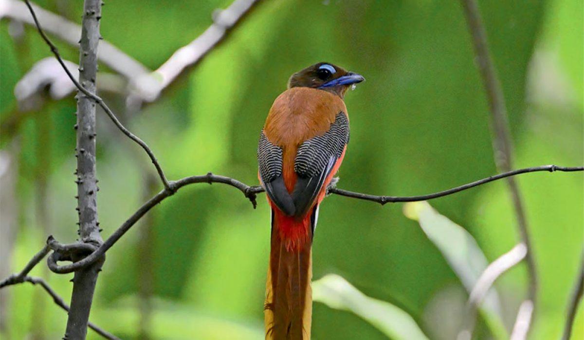 Au cœur de Bornéo, l'Oiseau magazine présente un carnet de voyage naturaliste