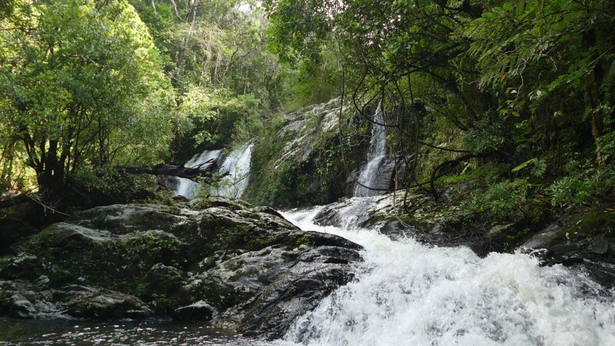 Préserver les forêts primaires de l'Est de Madagascar : l'ADAFAM et Univet Nature s'engagent ensemble à Manompana (Région de Tamatave).