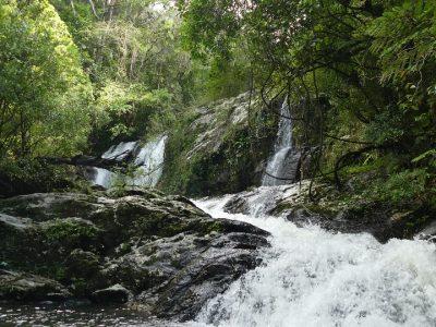 Préserver les forêts primaires de l'Est de Madagascar : l'ADAFAM et Feralis s'engagent ensemble à Manompana (Région de Tamatave).