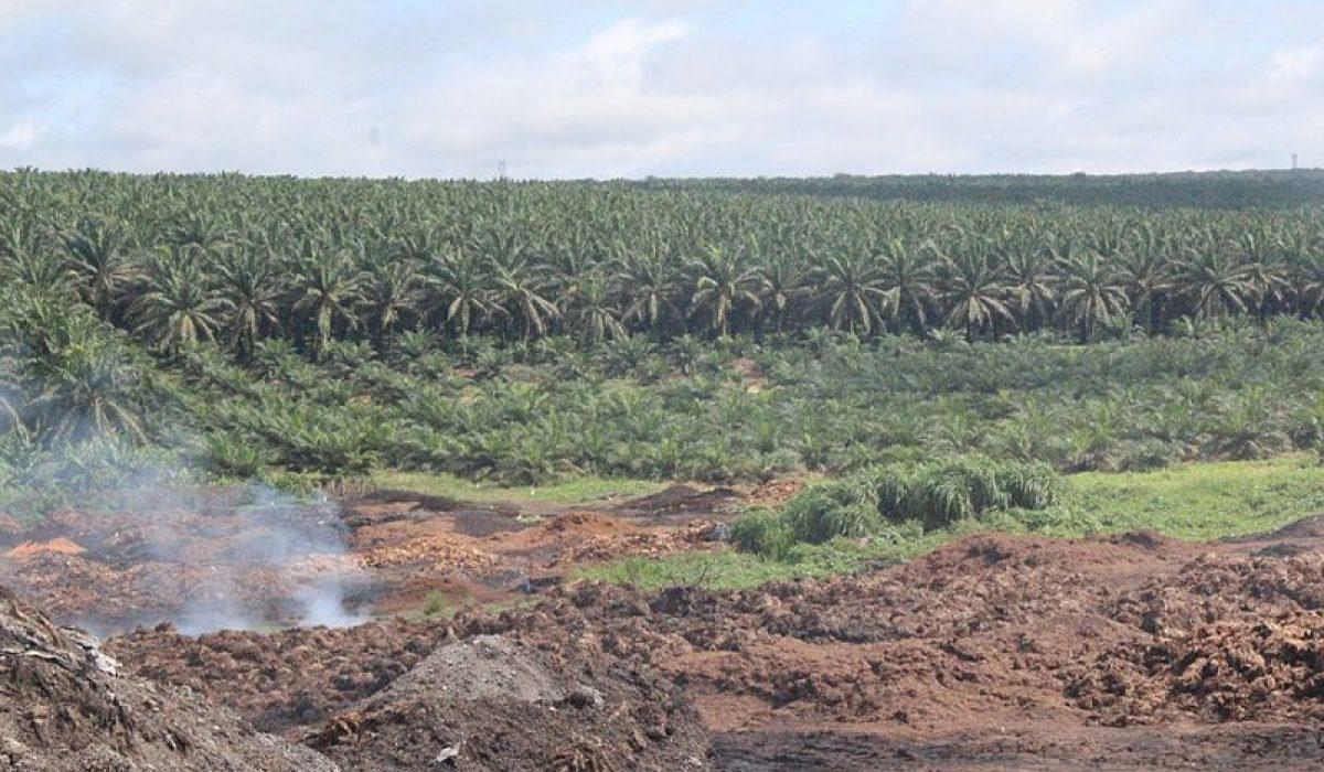 Palmiers à huile et mise en danger de la biodiversité tropicale