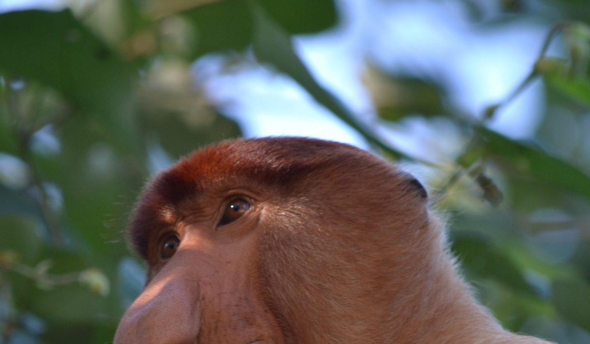 Les 7 écosystèmes du parc national de Bako (Malaisie)