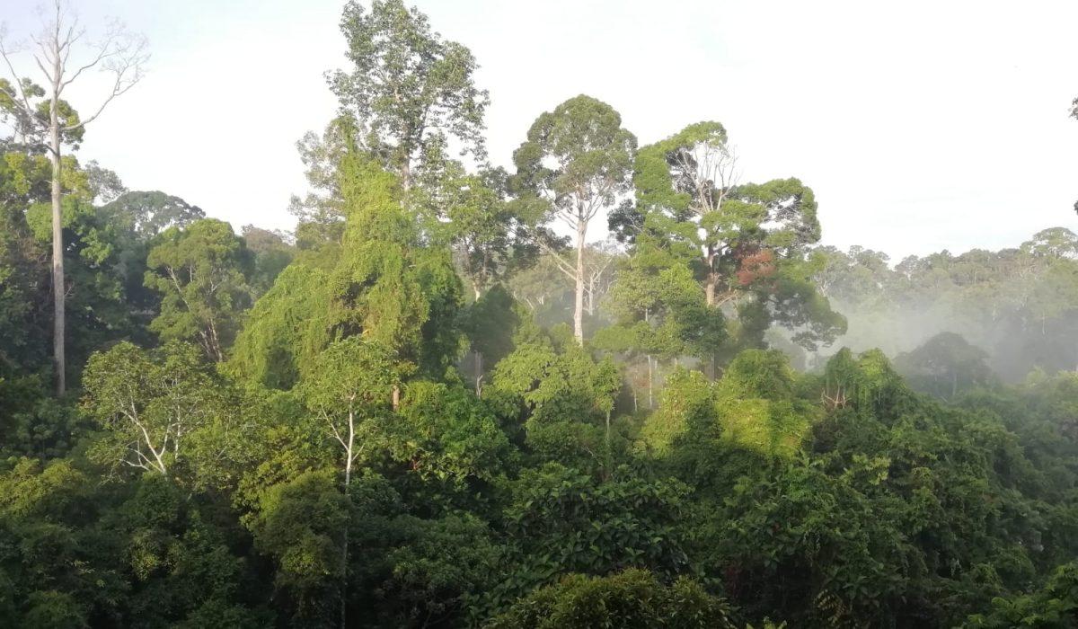 Expédition à Sabah (Malaisie) avec UNIVET NATURE (Première étape)