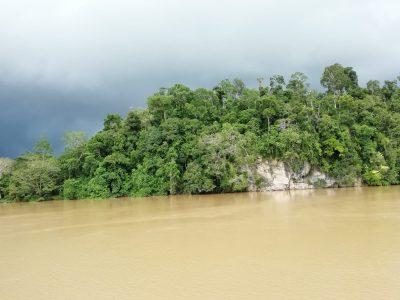 Etape 2 auprès de l'ONG HUTAN sur le Sungaï Kinabatangan