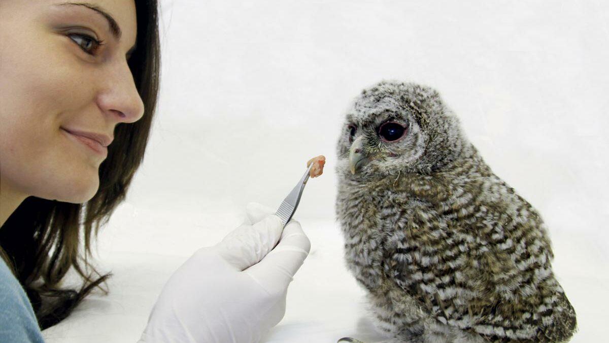 Univet Nature soutient le centre de sauvegarde de la faune sauvage de la LPO PACA