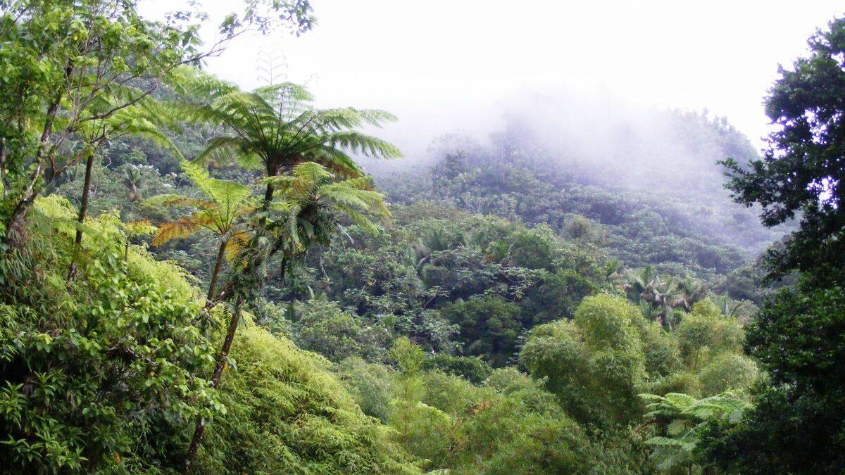Quelles différences entre une forêt primaire et une forêt secondaire ?