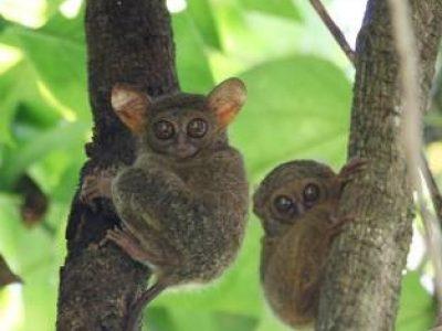 Tangkoko Conservation Education, un espoir pour la nature de Sulawesi