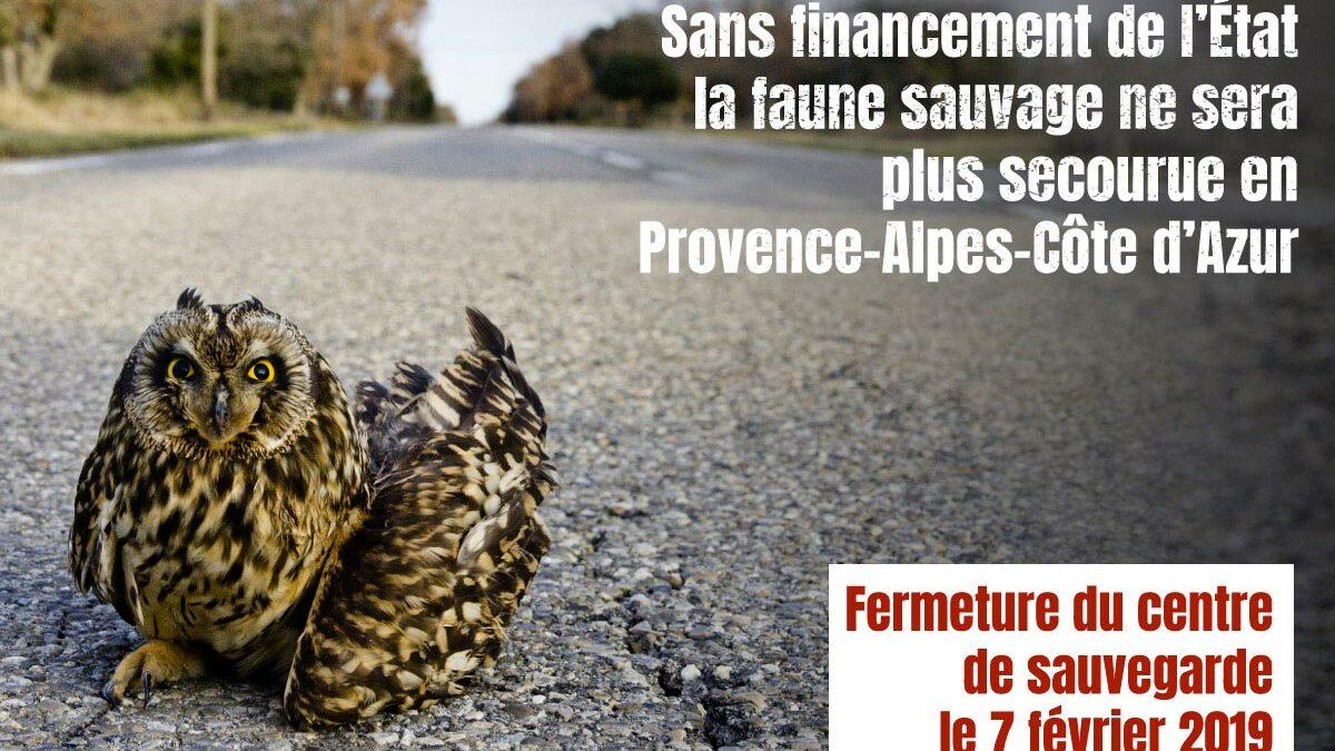 Les vétérinaires en colère contre le ministère de l'écologie suite à la fermeture du centre régional de sauvegarde de la faune sauvage de Provence-Alpes-Côte d'Azur
