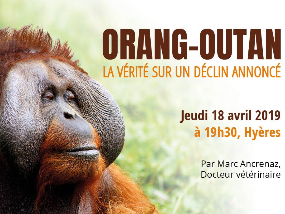 Conférence sur les Orangs-outans le 18 avril à Hyères, avec Hutan