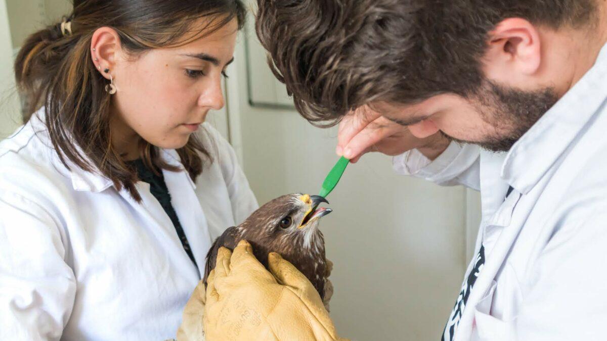 Le centre d'accueil de la faune sauvage de Faune Alfort et de l'Ecole vétérinaire d'Alfort (CEDAF) devient partenaire d'UNIVET NATURE