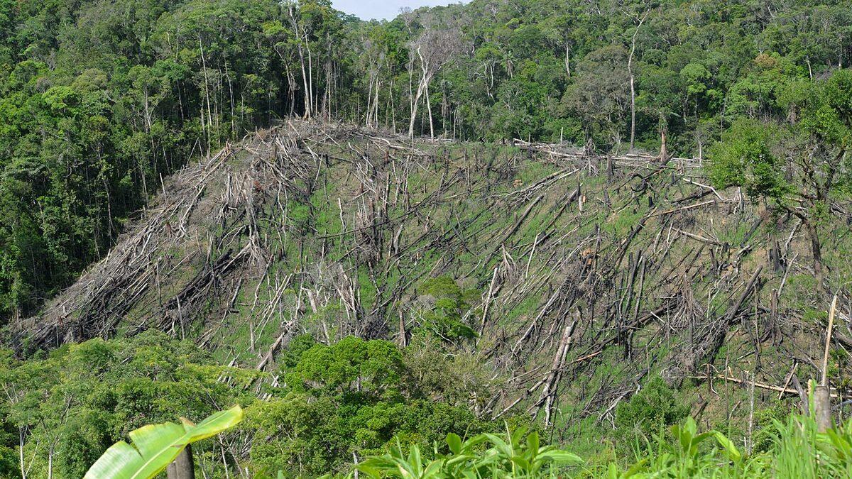 Nature sauvage de Madagascar. Tout sauver maintenant ou plus rien ne restera