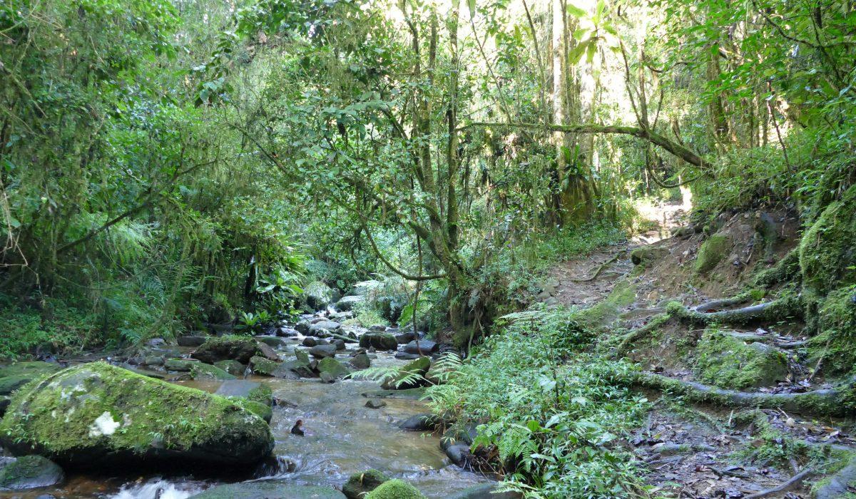 Seule la biodiversité des forêts naturelles pourrait freiner les effets du réchauffement climatique !