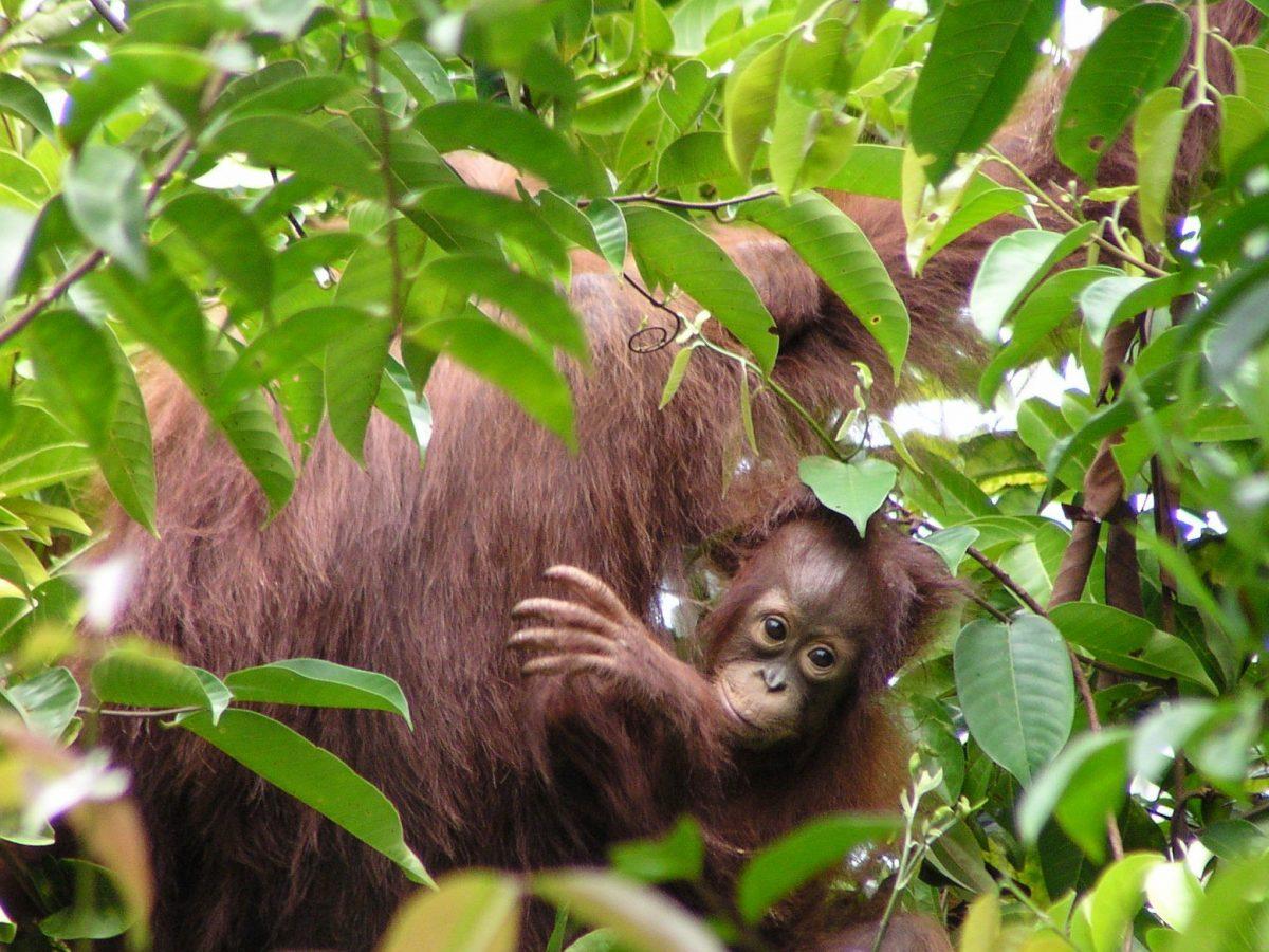 Un congrès mondial pour engager les nations dans la protection de la nature