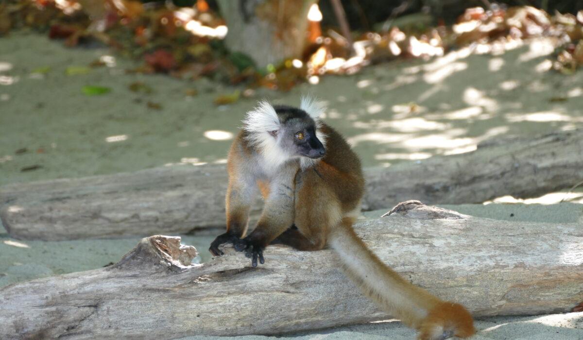 Une pétition pour la biodiversité de Madagascar