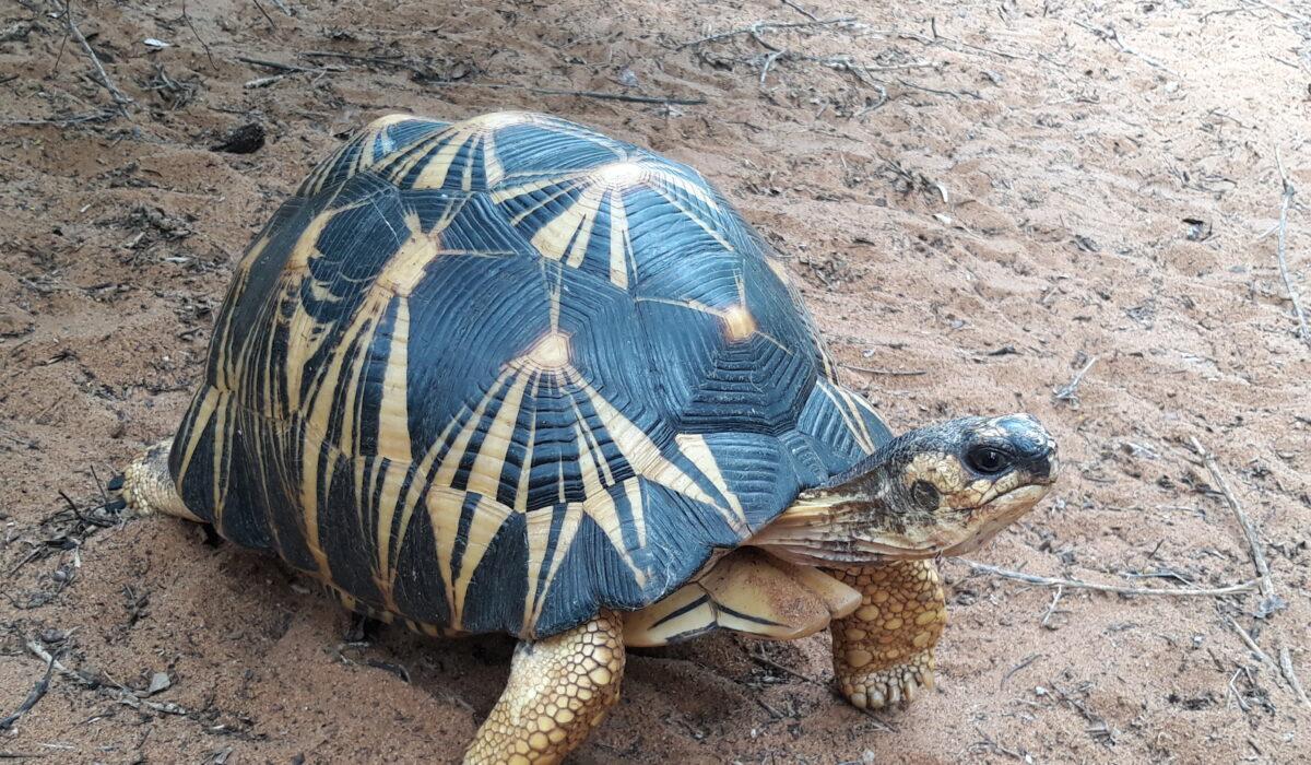 Zoetis et Univet Nature partenaires pour la protection des tortues à Madagascar