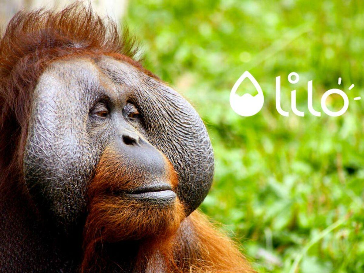 Aidez Univet Nature avec Lilo !