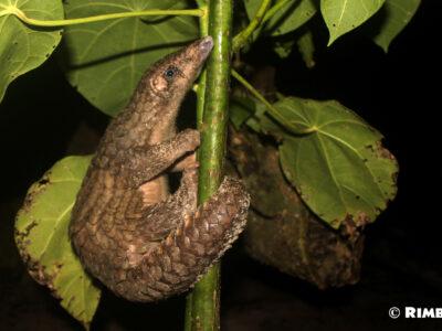 Entre mer et forêt, Rimba agit à Sumatra pour la biodiversité de l'Indonésie !