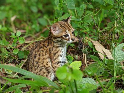 Un nouveau centre vétérinaire pour les animaux sauvages à Sumatra géré par Yaboumba