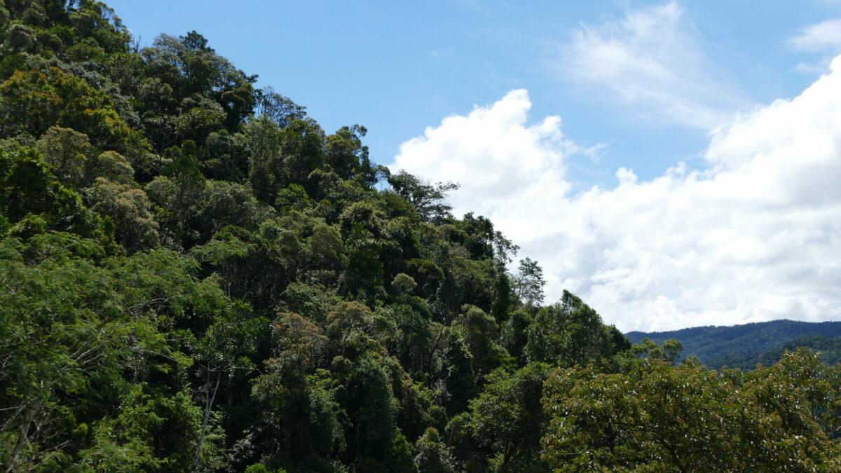 Comment préserver les vieilles forêts tropicales avec la compensation carbone ?