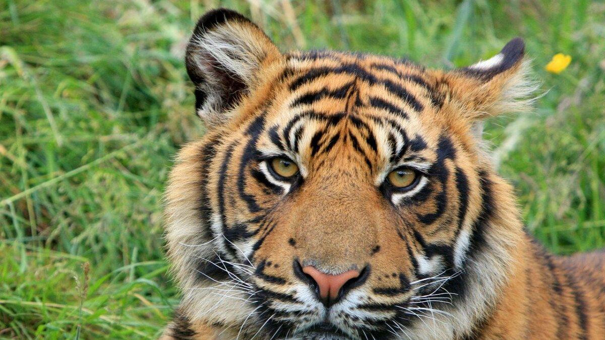 Sumatra, une richesse écologique exceptionnelle de l'Indonésie