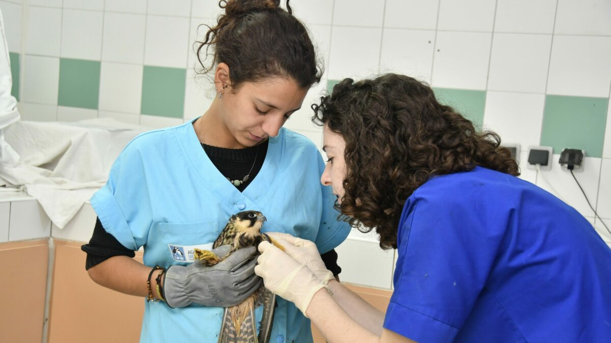 Des vétérinaires au secours des ONG de protection de la faune sauvage