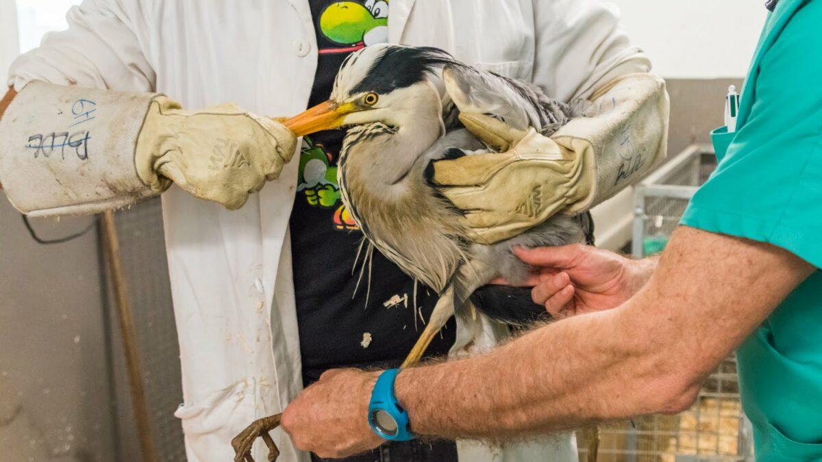 Faune Alfort et Univet Nature partenaires pour l'accueil d'urgence de la faune sauvage !