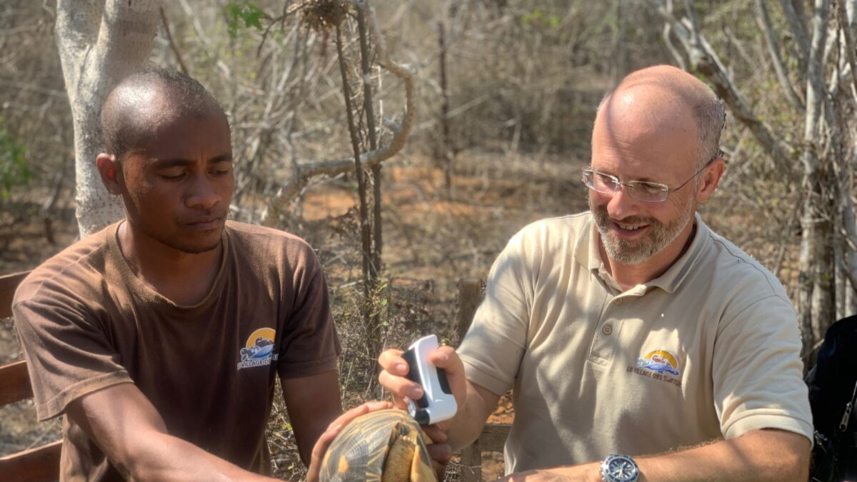 10.000 Tortues étoilées secourues par les vétérinaires à Madagascar
