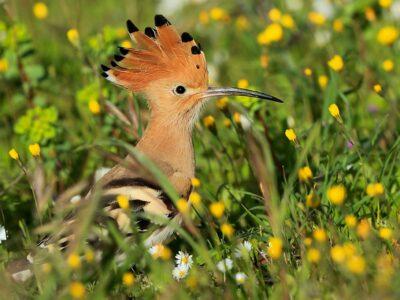 Des corridors environnementaux pour les oiseaux autour du lac d'Ichkeul en Tunisie