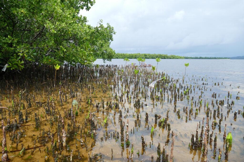 La-sante-dun-ecosysteme-tel-que-la-mangrove-favorise-la-protection-des-rivages-Madagascar-Benjamin-Kabouche
