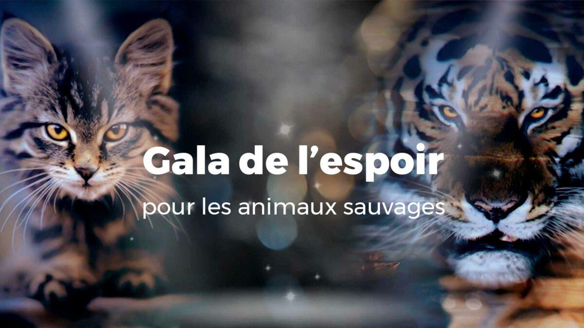 Un gala de l'espoir pour les animaux sauvages
