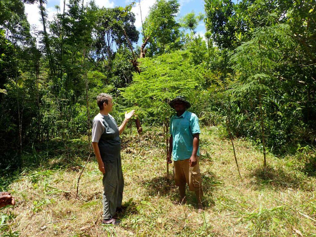 Plantation réussie de bois de rose. Chantal Misandeau et un guide Manompana