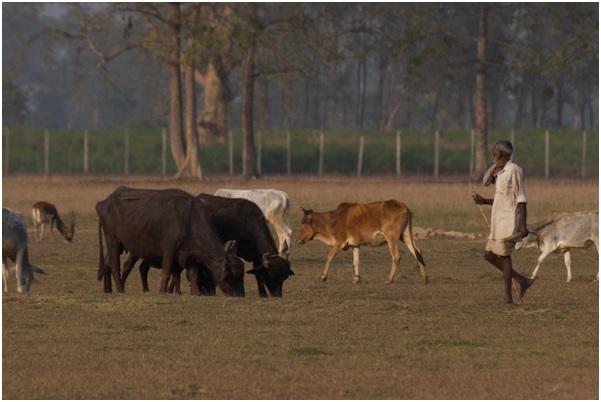 Berger conduisant son troupeau en périphérie du parc © Awely