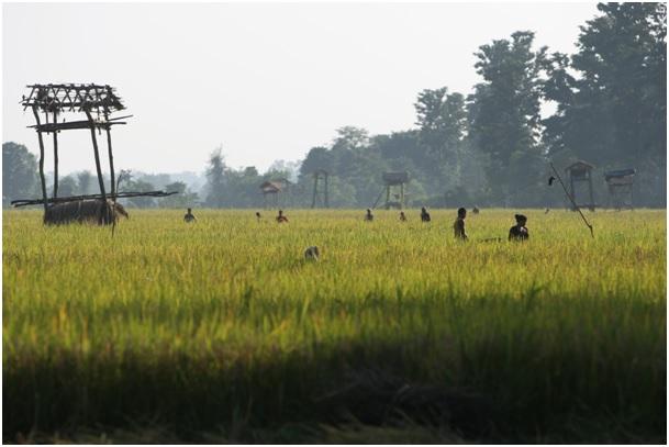 Travail au champ en périphérie du parc de Bardia © Awely