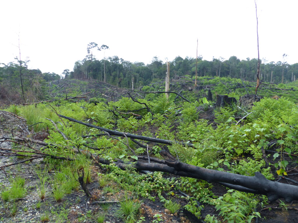 2015 - Déforestation Bornéo - Benjamin Kabouche