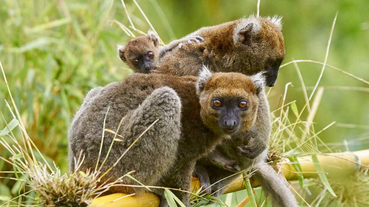 Quel espoir pour les animaux sauvages ce soir du 30 septembre 2021 ?